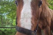 Horses / by Mayra van Hooydonk