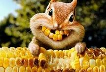 We love Chipmunks / by Chippmunk - Let's Shop!