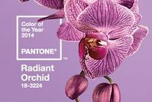 Color of the Year: Radiant Orchid / TODAY'S INSPIRATION: Pantone's Color of the Year! #Radiant Orchid.  How will you infuse it into your year? / by Chippmunk - Let's Shop!
