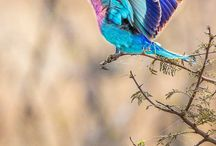 Gorgeous Creatures / Gorgeous animals  / by Amna A. Althani