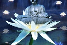 Buddha / by kim saccoccie