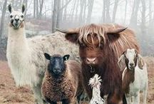 Animals // Farm Pets / by Charlotte Janssen