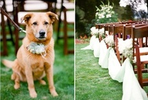 Dogs in Weddings / Ideas and inspiration for including your dog in your wedding. / by The Doggy Dojo