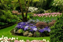 Beautiful flower gardens / by Darryn Staveley