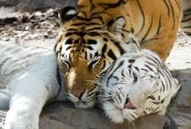 Animals! / by Busch Gardens Tampa