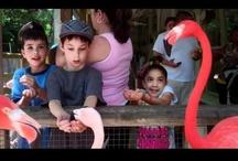 Kid-Friendly Adventures / by Busch Gardens Tampa