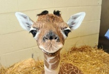 Laughing Out Loud / by Fatemehrabi