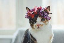 Cats / by Tamera Hios
