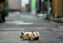 Cat I love / by Yumiko Blue