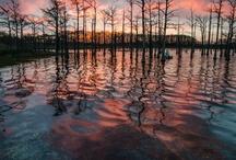 Louisiana / by The Stockade Bed and Breakfast