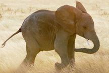 Elephants =D / by Adriana Nicole Padgett
