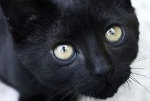 Black Cats / by Heidi Grieser