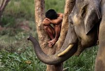 Steve McCurry / The greatest living Photographer, probably... / by Des Cannon
