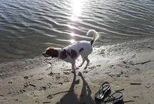 Beach ♥ Doggies!  / by Brigitte ♥