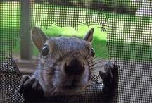 Simply Squirrel <3 / by michelle bennett