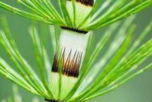 Edible Wild Plant Recipes / by Scott Ninneman