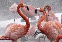 Flamingos / by Jean Drenner