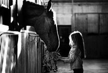 Cute Pics / by Horse & Life