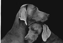 Perros divinos... / by Kirjokettu