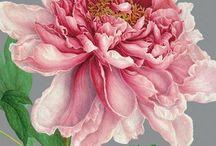 Botanical Illustrations / by Marianne Grundy-van Es