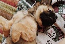 Dog on Cute / by Maritza Maravillas