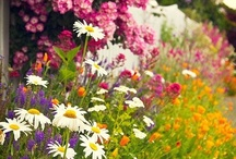 Cottage Garden Project / by Norma Velasco