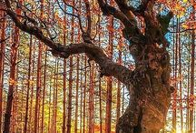 Trees / by nancy Greenhalgh