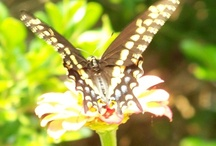A garden in Fla. and our animals / Flowers, butterflies and white squirrels / by Terry Brinson Lanier