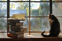 books / by Judy Maher