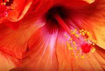 Color Splash / Color up ur life / by Yvonne Lopez