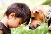 [dog photo ideas]  / by Kicksend