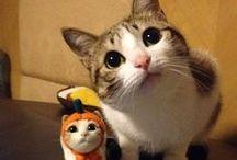 [cat photo ideas] / by Kicksend
