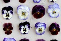 [full bloom]  / by Kicksend