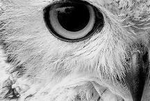 Owls / by Marta Piasentin