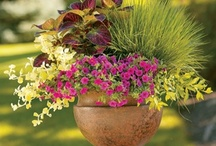 container gardening / by Diane Mangold