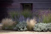 An Urban Garden / by Nicole Miller