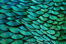 Peacocks / by Red Persimmon Imports - Katrina Ulrich