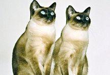 Cute!!! Animals , / by Emerald ,,, Retromama!!