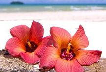 Hawaii! / The beauty of all of the islands!  / by Carol Friese