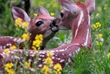 Animals  / by Debbie Brown