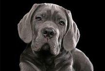 DOGS / by Yolanda Perry