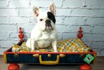 Pet Bed Ideas / by My Vintage Paws