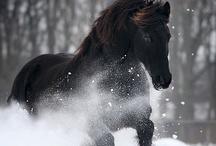 Winter fun / by Jill Pederson