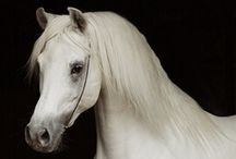 Horses / The most beautiful animals on earth. / by Ruth Ann Williams