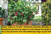 #Garden Product Buzz / Garden product brands seen or heard on TV, magazines, videos,radio,online articles,games and advertisements. Pin it and link to source material so we can see what products are buzzing in garden! / by #GARDENmediaBUZZ