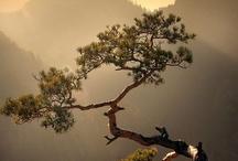 Bonsai / by Jim Spagle