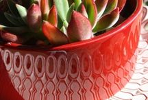 Succulents / by Dirk Hendrik Odendaal
