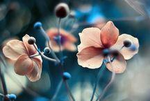 Flora / by N. E. S. Bragg