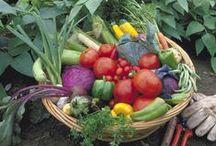 Vegetable gardening / by Arnita Shelton
