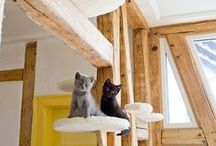 Accessoires pour chats / Tablettes, lits et échelles CHATS / by Denise Bellavance